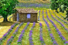 I Like It Rustic And Colorful...Always In My Country Portugal !... http://samissomarspace.wordpress.com