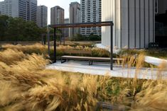NATHAN PHILLIPS SQUARE PODIUM TORONTO LARGEST ROOF GARDEN OF CANADA.