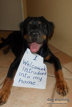 The big bad Rottie.  This one looks fearsome. Yeah, ok.  Such a cutie!