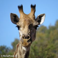 Über Instagram hier eingefügt just finished article on #jembisa #safari #lodge http://ift.tt/1ZNAWt1 - Malariafreie #Wildreservate in #südafrika #southafrica #malariafree #gamereserves #wb1001rb #wbesaesa @south_africa_through_my_eyes #wbpinsa #safari #photographicsafari #urlaub #holiday #photooftheday #reisen #afrika #africa #travelblogger #germanbloggers #reiseblogger #safarilodge #malariafreesafari #gamereservesouthafrica #africa_nature #nature_africa