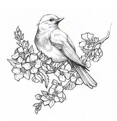 Pencil Drawings Of Flowers, Bird Drawings, Animal Drawings, Tattoo Drawings, Drawing Sketches, Drawing Flowers, Bird Pencil Drawing, Drawing Art, Sketches Of Birds