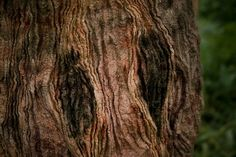 Woolfelted (structure tree bark!)