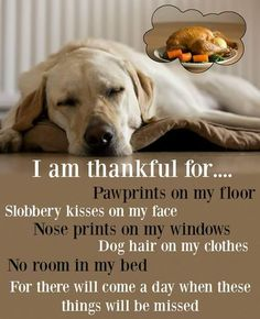 #thankful #pets I am thankful for paw prints on my floor, slobber kisses on my face, nose prints on my windows, dog hair on my clothes, no room in my bed. For there will come a day when these things will be missed.