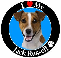 'I Love My Jack Russell' Car Magnet With Realistic Looking Jack Russell Photograph In The Center Covered In High Quality UV Gloss For Weather and Fading Protection Circle Shaped Magnet Measures 5.25 Inches Diameter >>> Check out this great product.