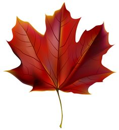 Beautiful Red Autumn Leaf PNG Clipart Image