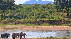 kruger national park - Google Search Kruger National Park, National Parks, Mountains, Google Search, Nature, Travel, Viajes, Naturaleza, Destinations
