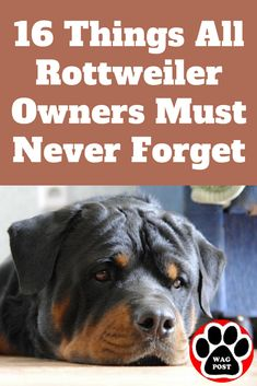 These important reminders should serve you well as awesome Rottweiler owners& 16 Things All Rottweiler Owners Must Never Forget Source by waggingtonpost The post 16 Things All Rottweiler Owners Must Never Forget appeared first on Jim Norman Dogs. Rottweiler Quotes, Rottweiler Facts, Rottweiler Training, Rottweiler Love, Rottweiler Puppies, Dog Training, German Rottweiler, Crate Training, Big Animals
