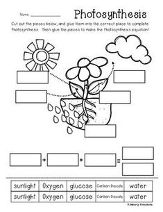 Photosynthesis for Kids Science worksheets, Plant