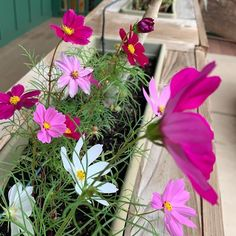 Cosmos Color Crescendo🌺 #Regram via @www.instagram.com/p/CLdT8_eAOnn/ #gardenlife #gardeninspiration #gardening #growsomethinggreen #seedstarting Buy Flowers, Pink Flowers, Cosmo Color, Fruit Seeds, Seeds For Sale, Tree Seeds, Growing Seeds, Love Your Home, Flower Farm