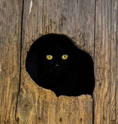 Black cat peek a boo Crazy Cat Lady, Crazy Cats, Cute Cats, Funny Cats, All About Cats, Back To Nature, Beautiful Cats, Cat Breeds, Belle Photo
