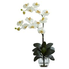 Double Phal Orchid w/Vase Arrangement - With it's delicate blooms softly reaching out, seemingly begging for a touch, the Orchid has been mesmerizing plant lovers for centuries. And this double Phal Orchid offers twice the beauty. With it's lovely silk blooms, sturdy stalks, and bed of cascading green, this offering is unmatched in beauty. Complete with a decorative vase with Liquid Illusion faux water and river rock. Ideal for a desk, counter, table, or anywhere else some delicate beauty is…