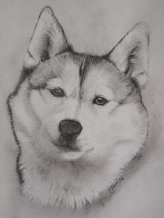 This is a picture of a Husky that I was asked to draw. I have drawn many animals on commission, and I am pleased with the response from buyers when they
