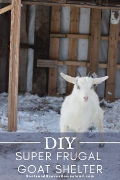 How to build a super frugal goat shelter. This budget friendly diy goat shelter is easy to put together with a few simple materials. Perfect for raising goats for beginners. Raising Farm Animals, Raising Goats, Raising Chickens, Small Goat, Small Farm, Goat Fence, Goat Shelter, Vegan Kitchen, Kitchen Recipes