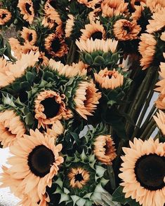 New Ideas For Plants Wallpaper Iphone Beautiful Flowers Aesthetic Iphone Wallpaper, Aesthetic Wallpapers, Floral Wallpaper Iphone, Stripe Wallpaper, Cute Wallpapers, Wallpaper Backgrounds, Floral Wallpapers, Trendy Wallpaper, Wallpaper Plants