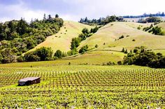 """The Anderson Valley is the land of Pinot Noir, Chardonnay, & other cool climate grapes. Our """"Wine Country Photo of the Day"""" was shot at the Navarro Winery. Tasting Room, Pinot Noir, Wine Country, Explore, Wineries, Places, Picnic, Photography, Travel"""