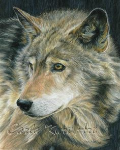 Amazing artist!  Wolf Art CURIOUS EYES by Carla Kurt Signed Wolf by CarlaKurtArt, $45.00