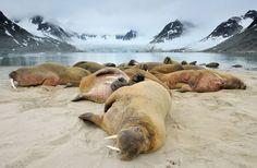 Ce photographe naturaliste parcourt le monde pour capturer des clichés d'animaux…