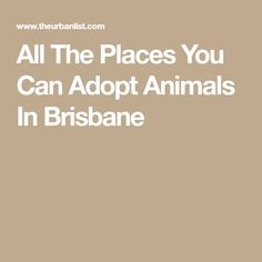 All The Places You Can Adopt Animals In Brisbane