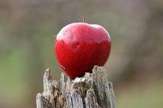 apple-345170_640