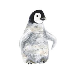 This animal wall art is a giclee print of Brett Blumenthal's original portrait of a baby penguin. The young bird is the perfect decor for an arctic nursery.
