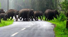 En Route Wayanad, You Might Have To Deal With This.