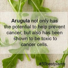 Arugula not only has the potential to help prevent cancer, but also has been shown to be toxic to cancer cells.