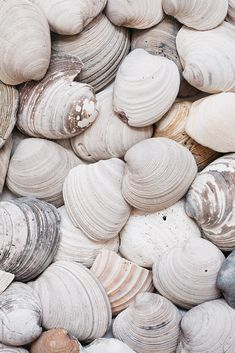 overhead image of rustic clam shells by Kelly Knox for Stocksy United Beach Aesthetic, Summer Aesthetic, White Aesthetic, Whatsapp Wallpaper, Clams, Wall Collage, Picture Wall, Aesthetic Wallpapers, White Photography