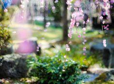 Spring Pictures, Film Strip, Photo L, Fujifilm, F1, Filmstrip