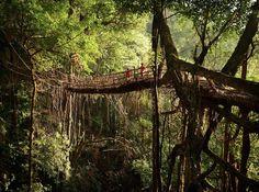 Ponts dans les arbres