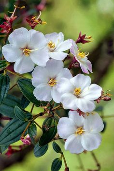 A Love of Beautiful Nature Flowers Nature, Exotic Flowers, Amazing Flowers, My Flower, Pretty Flowers, White Flowers, Flower Art, Spring Flowers, Flower Pictures
