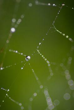 Spider Web & Rain | by Joseph W. Nienstedt
