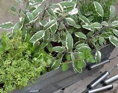 Výsledek obrázku pro terasy květiny v nádobách Celery, Spices, Herbs, Vegetables, Balcony, Plants, Spice, Herb, Vegetable Recipes