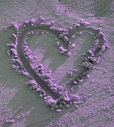 *Love Purple!