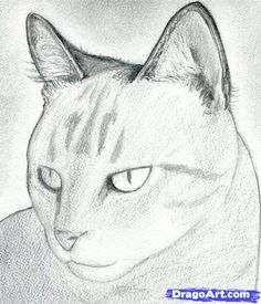 how to draw a cat head, draw a realistic cat step 7