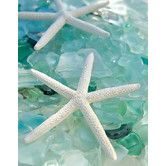 Found it at Wayfair - Seaglass 1 by Alan Blaustein Photographic Print on Wrapped Canvas