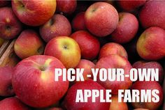 Pick-Your-Own Apple Farms