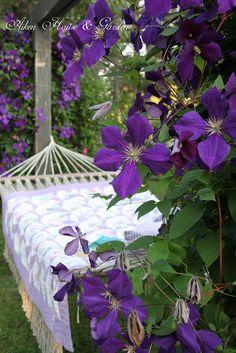 Aiken House & Gardens: Hammock Days Jackmani superbra clematis f Purple Lilac, Green And Purple, Purple Flowers, Yellow, Purple Garden, Colorful Garden, Violet Garden, Garden Picnic, Lavender Cottage