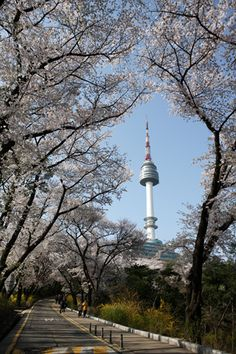 N Seoul Tower (N 서울타...