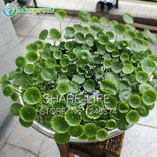 100ks Dichondra repens trávniky semená visí dekoratívne záhradných rastlín Bonsai Ľahko Črepníkové 100% Skutočný semien (Čína (pevninská časť))