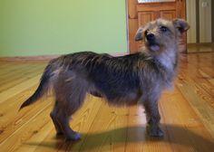 Tośka -wesoła, przyjazna 4,5kg szczęśćia :-) Idealna do domu