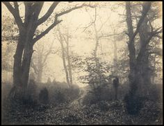[Fontainebleau Forest] Eugène Cuvelier (French, 1837–1900), early 1860s, Salted paper print from paper negative