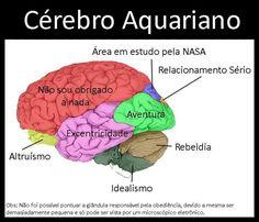 O Cérebro Aquariano