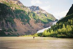 bear glacier in Alaska