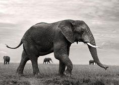 ゾウの群れ(タンザニア)