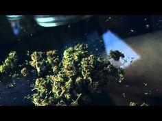 Florida Right to Medical Marijuana Initiative, Amendment 2 (2014) - Ballotpedia