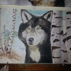The wolf in watercolor