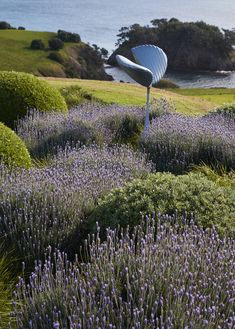 One of New Zealand's foremost landscape design studios, Suzanne Turley Landscapes has been creating beautiful outdoor spaces for more than 20 years. Outdoor Living Areas, Outdoor Spaces, Landscape Design, Garden Design, Planting Grass, Garden Landscaping, Perennials, Pergola, Exterior