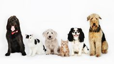 Clear the Shelters - 7/23/2016. NBC is reporting that over 45,000 dogs were adopted during the Clear the Shelters event.