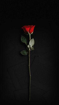 Rose In Dark IPhone Wallpaper - IPhone Wallpapers