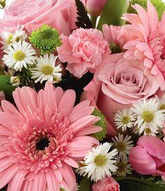 eine wahnsinnig schöne Blume für drinnen ist die schöne Calla !